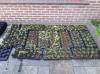 Het Klasse kwekers project